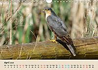 British Birds of Prey (Wall Calendar 2019 DIN A4 Landscape) - Produktdetailbild 4
