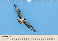 British Birds of Prey (Wall Calendar 2019 DIN A4 Landscape) - Produktdetailbild 2