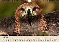 British Birds of Prey (Wall Calendar 2019 DIN A4 Landscape) - Produktdetailbild 7