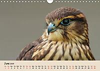 British Birds of Prey (Wall Calendar 2019 DIN A4 Landscape) - Produktdetailbild 6