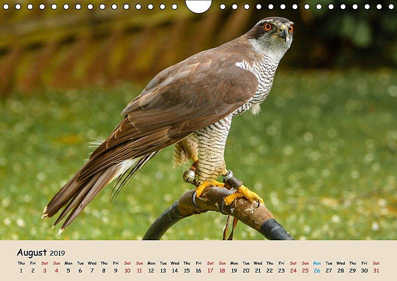 British Birds Of Prey Wall Calendar 2019 Din A4 Landscape Kalender