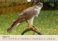 British Birds of Prey (Wall Calendar 2019 DIN A4 Landscape) - Produktdetailbild 8