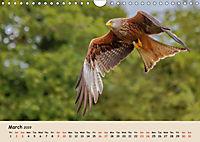 British Birds of Prey (Wall Calendar 2019 DIN A4 Landscape) - Produktdetailbild 3