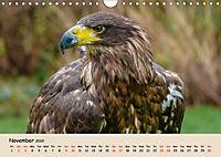 British Birds of Prey (Wall Calendar 2019 DIN A4 Landscape) - Produktdetailbild 11