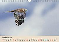 British Birds of Prey (Wall Calendar 2019 DIN A4 Landscape) - Produktdetailbild 12
