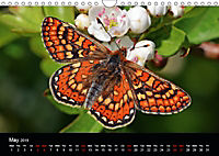 British Butterflies 2019 (Wall Calendar 2019 DIN A4 Landscape) - Produktdetailbild 5
