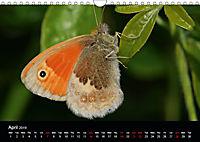 British Butterflies 2019 (Wall Calendar 2019 DIN A4 Landscape) - Produktdetailbild 4