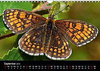British Butterflies 2019 (Wall Calendar 2019 DIN A4 Landscape) - Produktdetailbild 9