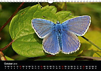 British Butterflies 2019 (Wall Calendar 2019 DIN A4 Landscape) - Produktdetailbild 10
