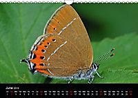 British Butterflies 2019 (Wall Calendar 2019 DIN A4 Landscape) - Produktdetailbild 6