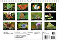 British Butterflies 2019 (Wall Calendar 2019 DIN A4 Landscape) - Produktdetailbild 13