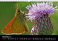 British Butterflies 2019 (Wall Calendar 2019 DIN A4 Landscape) - Produktdetailbild 11