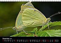 British Butterflies 2019 (Wall Calendar 2019 DIN A4 Landscape) - Produktdetailbild 12