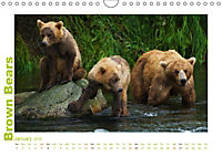 Brown Bears 2019 UK-Version (Wall Calendar 2019 DIN A4 Landscape) - Produktdetailbild 1