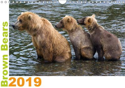 Brown Bears 2019 UK-Version (Wall Calendar 2019 DIN A4 Landscape), Max Steinwald