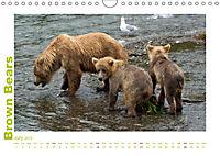 Brown Bears 2019 UK-Version (Wall Calendar 2019 DIN A4 Landscape) - Produktdetailbild 7