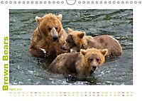 Brown Bears 2019 UK-Version (Wall Calendar 2019 DIN A4 Landscape) - Produktdetailbild 4