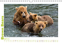 Brown Bears 2019 UK-Version (Wall Calendar 2019 DIN A4 Landscape) - Produktdetailbild 4