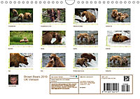 Brown Bears 2019 UK-Version (Wall Calendar 2019 DIN A4 Landscape) - Produktdetailbild 13