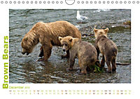 Brown Bears 2019 UK-Version (Wall Calendar 2019 DIN A4 Landscape) - Produktdetailbild 12