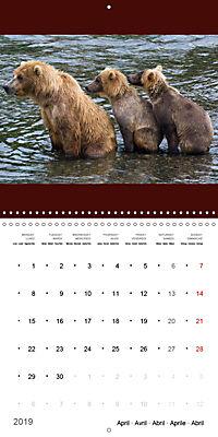 Brown Bears in the wild (Wall Calendar 2019 300 × 300 mm Square) - Produktdetailbild 4