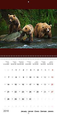 Brown Bears in the wild (Wall Calendar 2019 300 × 300 mm Square) - Produktdetailbild 1