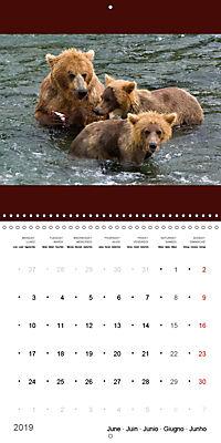 Brown Bears in the wild (Wall Calendar 2019 300 × 300 mm Square) - Produktdetailbild 6