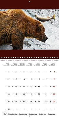 Brown Bears in the wild (Wall Calendar 2019 300 × 300 mm Square) - Produktdetailbild 9