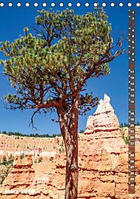 BRYCE CANYON Natur Pur (Tischkalender 2019 DIN A5 hoch) - Produktdetailbild 3