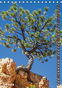 BRYCE CANYON Natur Pur (Tischkalender 2019 DIN A5 hoch) - Produktdetailbild 7