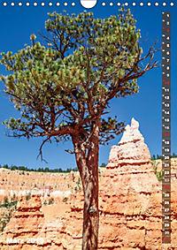 BRYCE CANYON Natur Pur (Wandkalender 2019 DIN A4 hoch) - Produktdetailbild 3