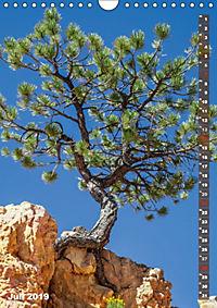 BRYCE CANYON Natur Pur (Wandkalender 2019 DIN A4 hoch) - Produktdetailbild 7
