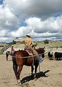 Buck - Der wahre Pferdeflüsterer - Produktdetailbild 2