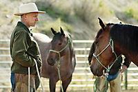 Buck - Der wahre Pferdeflüsterer - Produktdetailbild 6