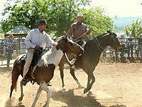 Buck - Der wahre Pferdeflüsterer - Produktdetailbild 4