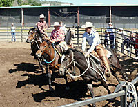 Buck - Der wahre Pferdeflüsterer - Produktdetailbild 5