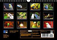 Budgie Calendar - UK Version (Wall Calendar 2019 DIN A4 Landscape) - Produktdetailbild 13