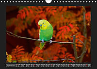 Budgie Calendar - UK Version (Wall Calendar 2019 DIN A4 Landscape) - Produktdetailbild 9