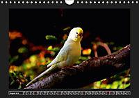 Budgie Calendar - UK Version (Wall Calendar 2019 DIN A4 Landscape) - Produktdetailbild 8