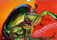 BUGS, Bunte Insekten (Wandkalender 2019 DIN A4 quer) - Produktdetailbild 7