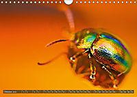 BUGS, Bunte Insekten (Wandkalender 2019 DIN A4 quer) - Produktdetailbild 10