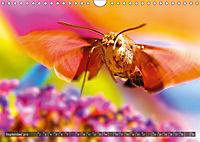 BUGS, Bunte Insekten (Wandkalender 2019 DIN A4 quer) - Produktdetailbild 9