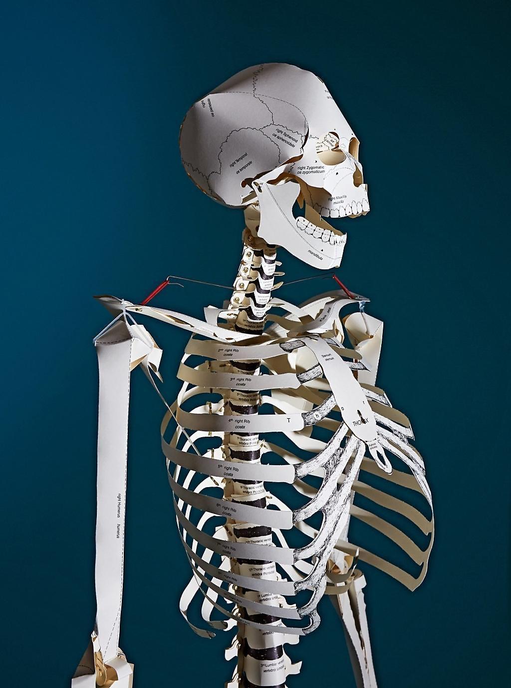 Build Your Own Human Skeleton 180 M Life Size Buch Portofrei