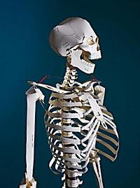 Build Your Own Human Skeleton - Life Size! - Produktdetailbild 1
