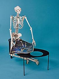 Build Your Own Human Skeleton - Life Size! - Produktdetailbild 4