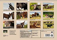 Bulgarische Großesel - Schwarze Schönheiten (Wandkalender 2019 DIN A3 quer) - Produktdetailbild 5