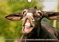 Bulgarische Großesel - Schwarze Schönheiten (Wandkalender 2019 DIN A4 quer) - Produktdetailbild 3