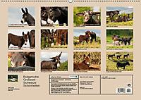 Bulgarische Grossesel - Schwarze Schönheiten (Wandkalender 2019 DIN A2 quer) - Produktdetailbild 13