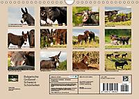 Bulgarische Großesel - Schwarze Schönheiten (Wandkalender 2019 DIN A4 quer) - Produktdetailbild 13