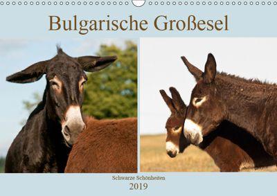 Bulgarische Großesel - Schwarze Schönheiten (Wandkalender 2019 DIN A3 quer), Meike Bölts